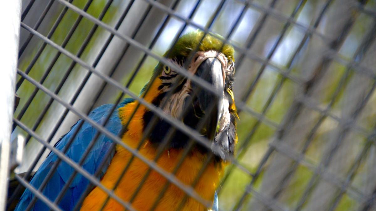 Papagayo cautivo en un zoológico