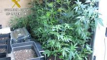 Detenidas tres personas que cultivaban 32 plantas de marihuana en una casa de Arinaga