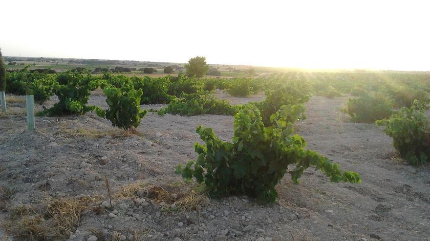 """Álava considera un """"error"""" que el Gobierno vasco abandone la mesa del Consejo Regulador de la D.O. Rioja"""