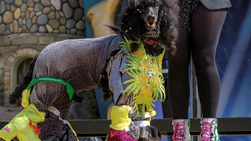 Drag La obsesionada, ganador del carnaval canino de Las Palmas de Gran Canaria