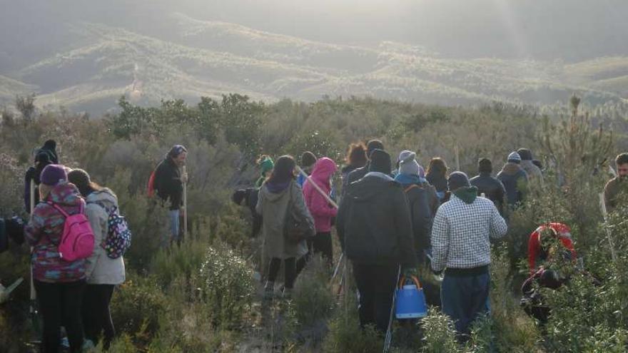 Programa de voluntariado de Plantabosques / http://juventudextremadura.gobex.es