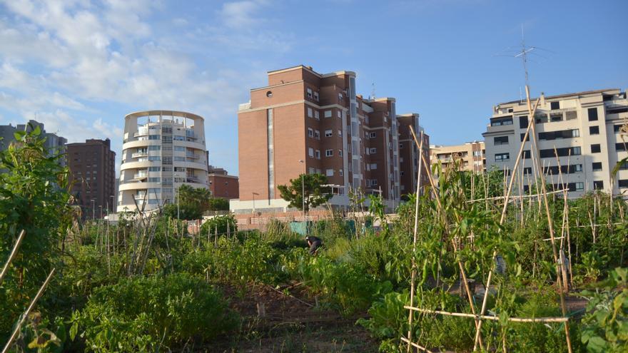 Un huerto urbano en Castellón.