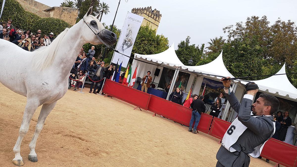 Campeonato Nacional de Caballos Árabes celebrado en Córdoba
