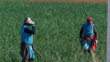 Estado de alarma en el campo: ¿precariedad, explotación o esclavitud?