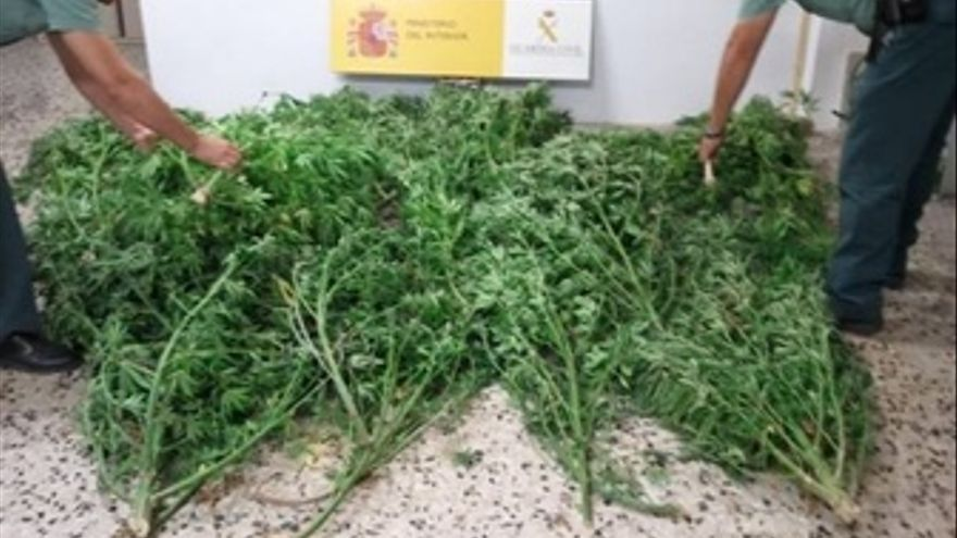 Marihuana Intervenida En Albox