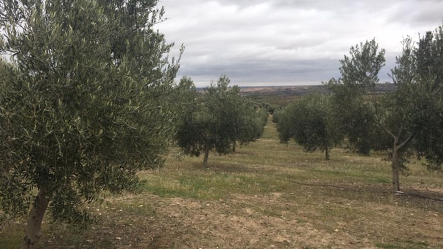 Explotación de olivar