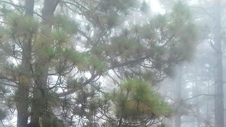 Árbol al que tuvieron que subir los bomberos para realizar la ayuda