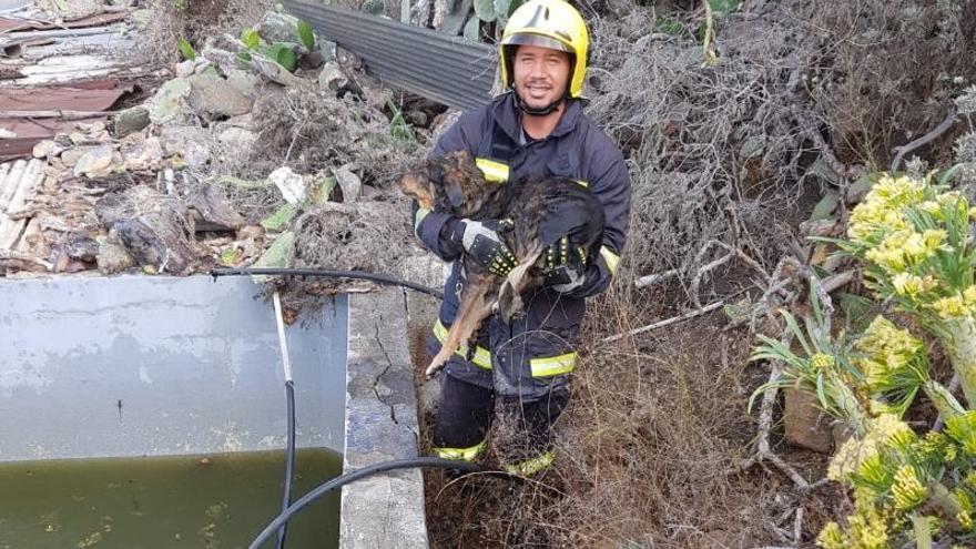 Un efectivo de los bomberos con el perro en los brazos.