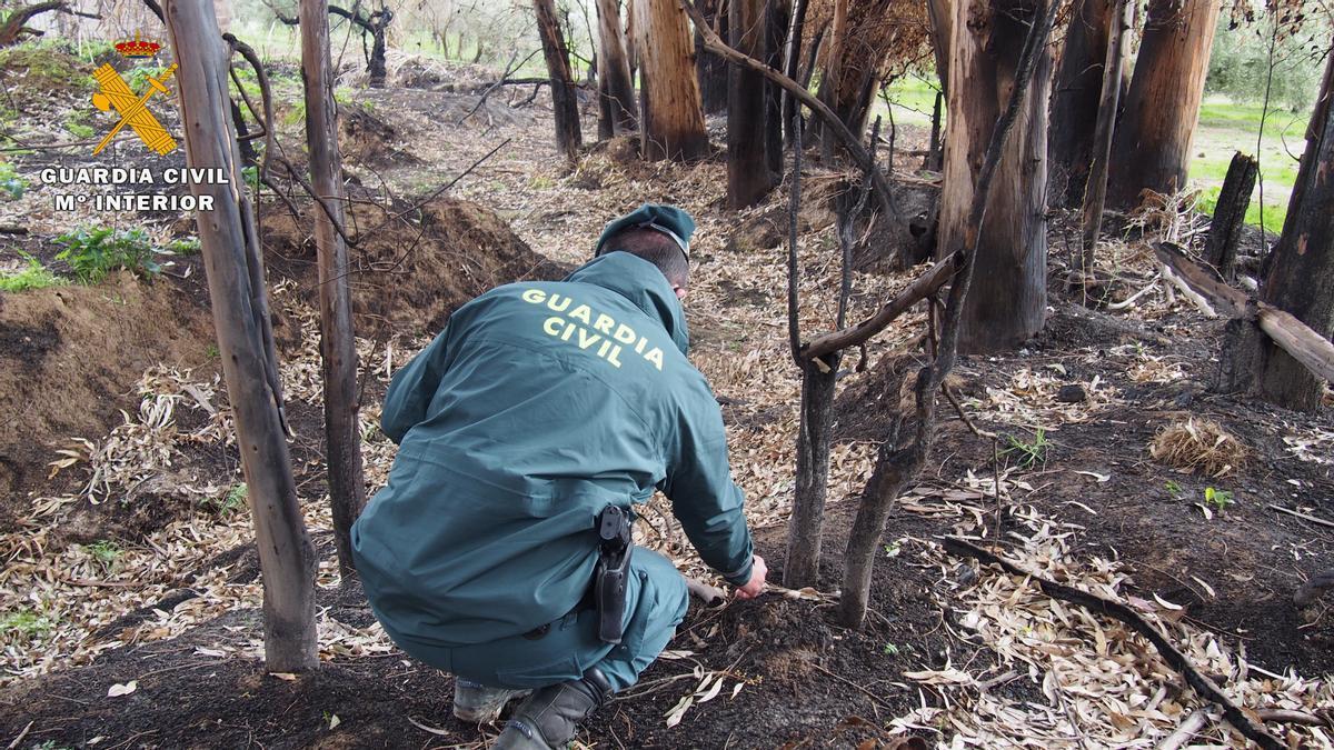 Un agente del Seprona recogiendo muestras del incendio.