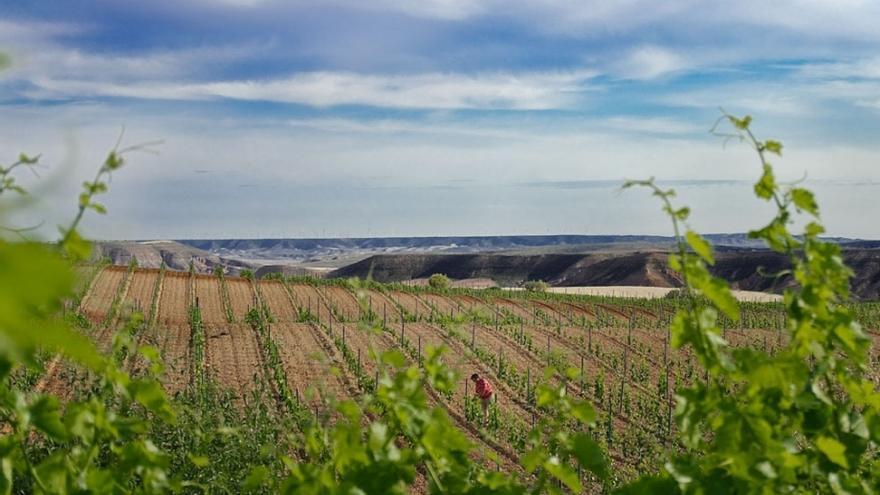 El objetivo de estas medidas de apoyo es aumentar la competitividad de los productores de uva y vino de la comunidad