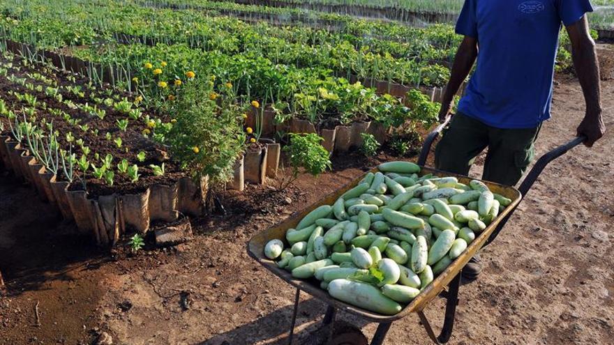 Congresistas de EE.UU. ven en el área agrícola una posibilidad de intercambio con Cuba