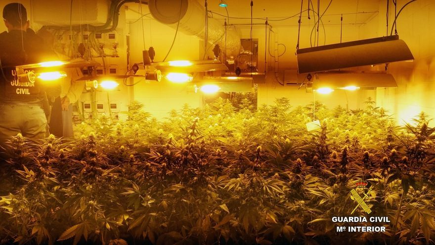 Intervenidas 400 plantas de marihuana en un chalet de Mogro