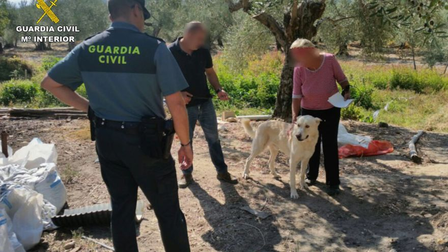Robo perros Guardia Civil rehalas