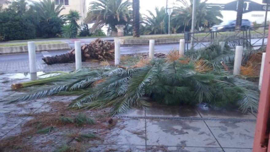 Los efectos de la borrasca, en Mérida