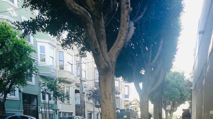 Estas rocas aparecieron misteriosamente en San Francisco