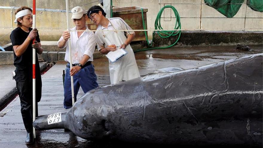 Japón aprueba una ley en apoyo de su controvertida caza comercial de ballenas