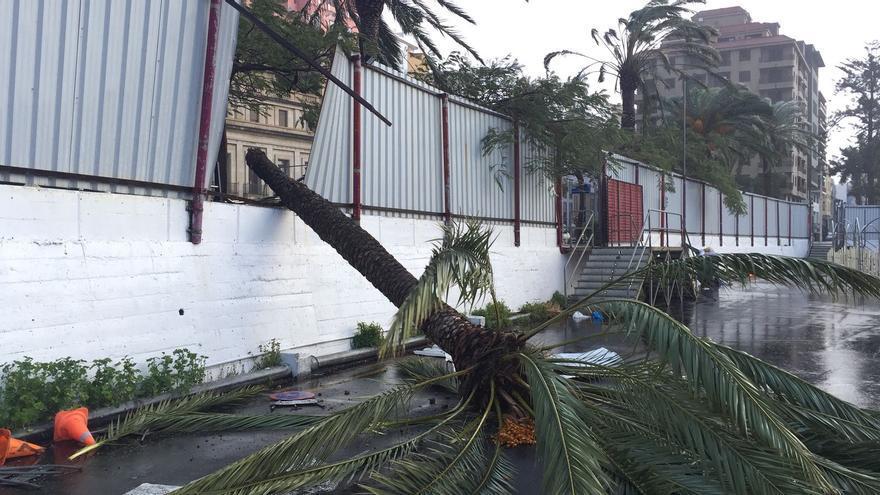 En la imagen, palmera tumbada por el viento en la explanada de aparcamiento del Puerto de Santa Cruz de La Palma