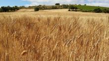 La insuficiencia de la renta agraria subyace del estudio de la PAC en Aragón