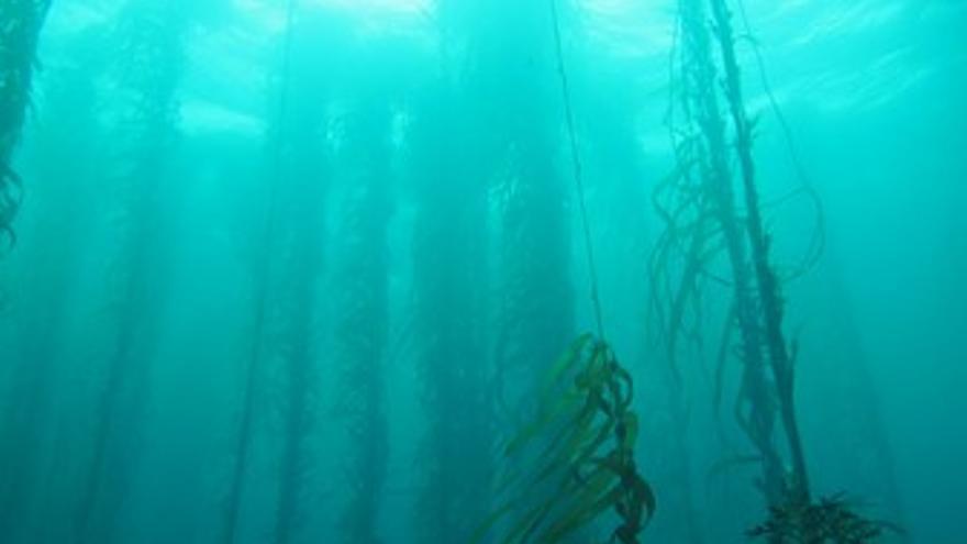 Fotografías: las algas gigantes o kelp (arriba), un amanecer en Anson Bay (centro) y un fondo rocoso con peces. (RODRIGO RIERA)