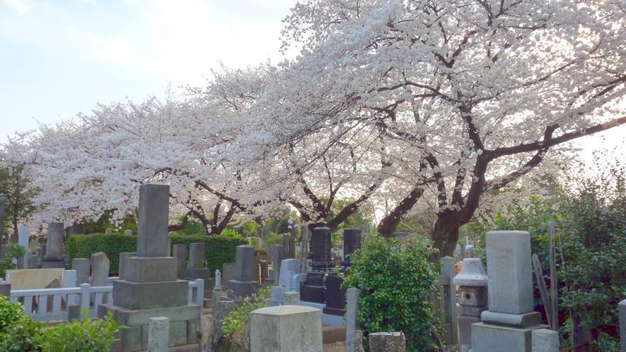 Cerezos en flor en el Cementerio de Yanaka. DozoDomo