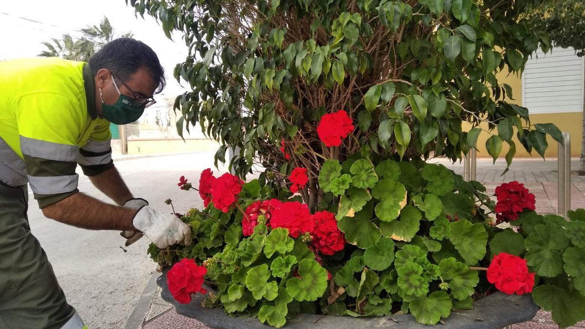 El Ayuntamiento de Murcia llevas más de 10.000 flores de temporada a las zonas verdes y maceteros de las pedanías