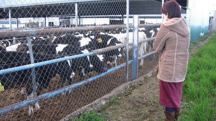 Vacas y terneros en una granja de explotación láctea. Foto: Igualdad Animal