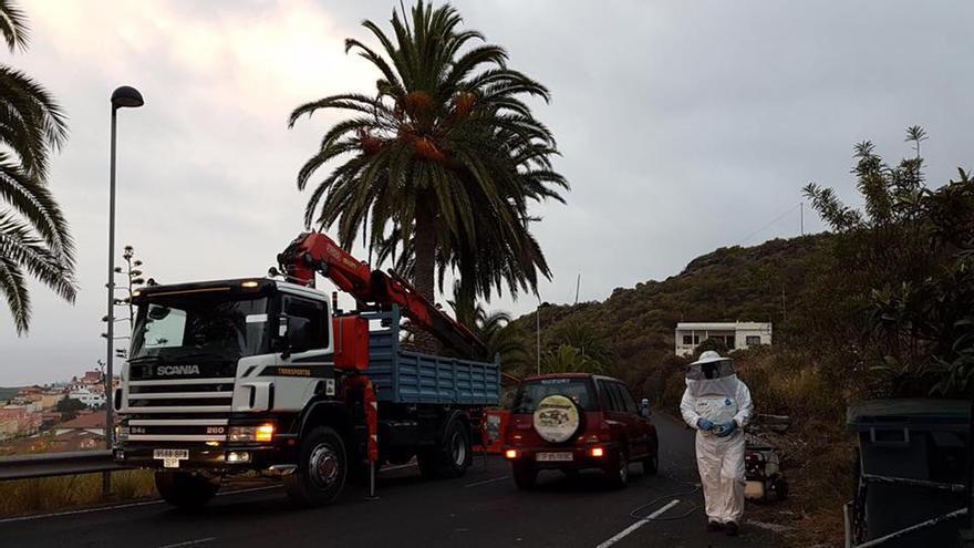 En la imagen, un momento de la actuación llevada a cabo para retirar el avispero. Foto: Facebook de Borja Pérez.