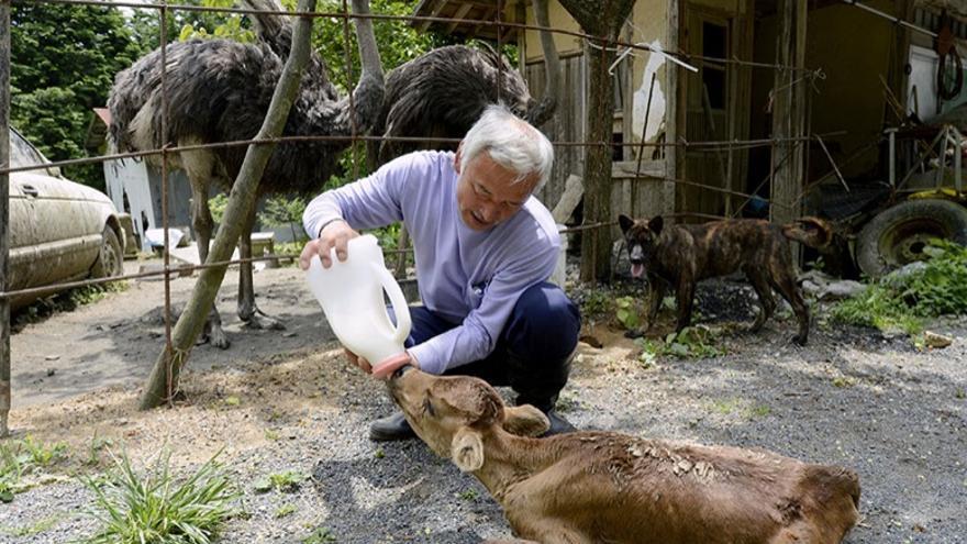 Naoto Matsumura alimentando a un ternero. Foto: Página de apoyo a Naoto en Facebook