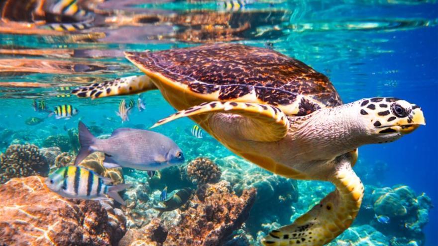 Biodiversidad marina.