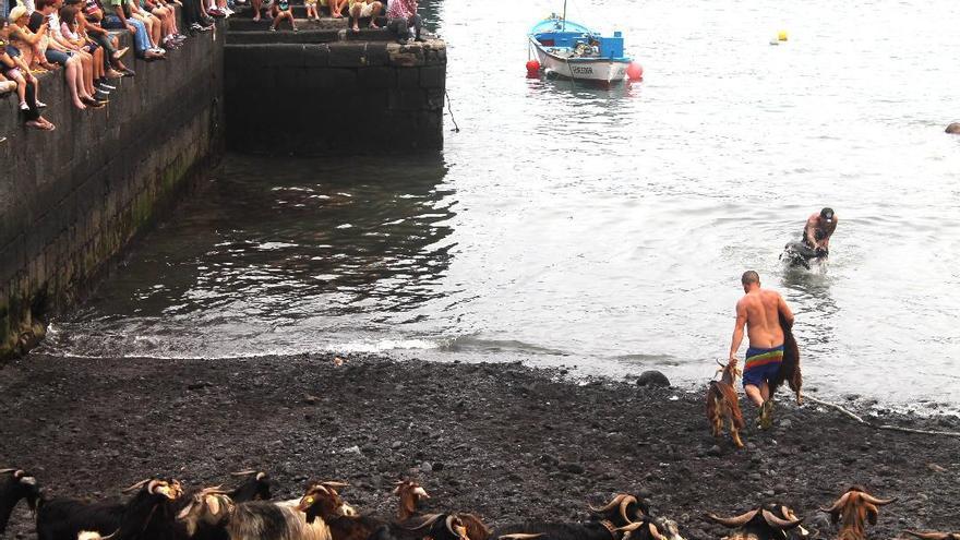 Baño de cabras en una edición anterior de la fiesta de San Juan, en la playa del muelle de Puerto de la Cruz