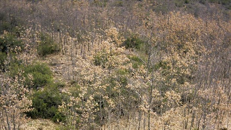 El Hayedo de Montejo alberga el 40 por ciento de las mariposas de la península