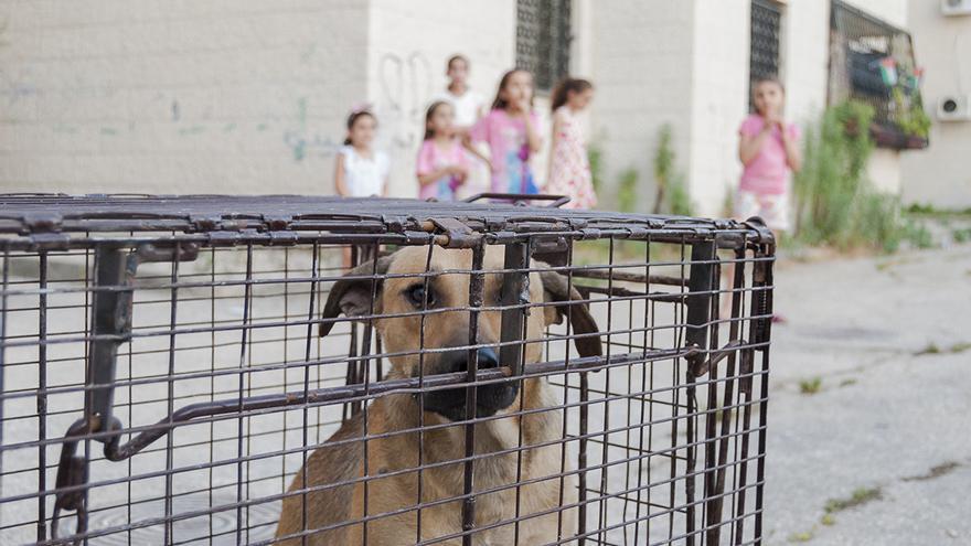Rescate por la PAL de una cachorra que vagaba por las calles de Tulkarem. Foto: Javier Martín