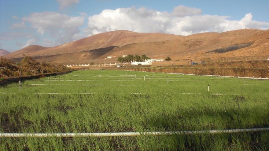 Aquellos agricultores que deseen hacer los canteros de cebollino en la Granja Agrícola Experimental deberán solicitarlos en la propia Granja hasta el 15 de agosto.