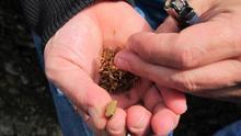 El Gobierno vasco advierte de la emergencia de trastornos mentales en adolescentes por el consumo de cannabis
