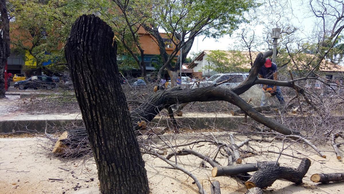 Deforestación de las calles en Maracay