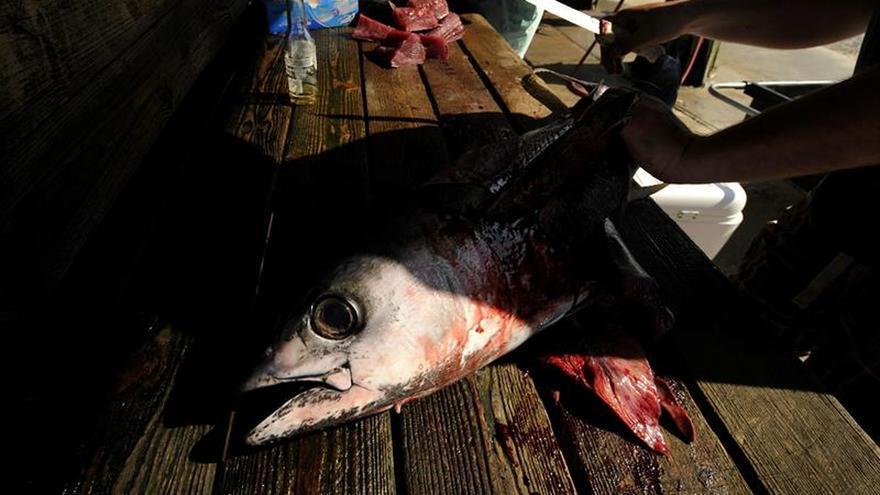 México podrá sancionar a EEUU por 163 millones de dólares en disputa del atún