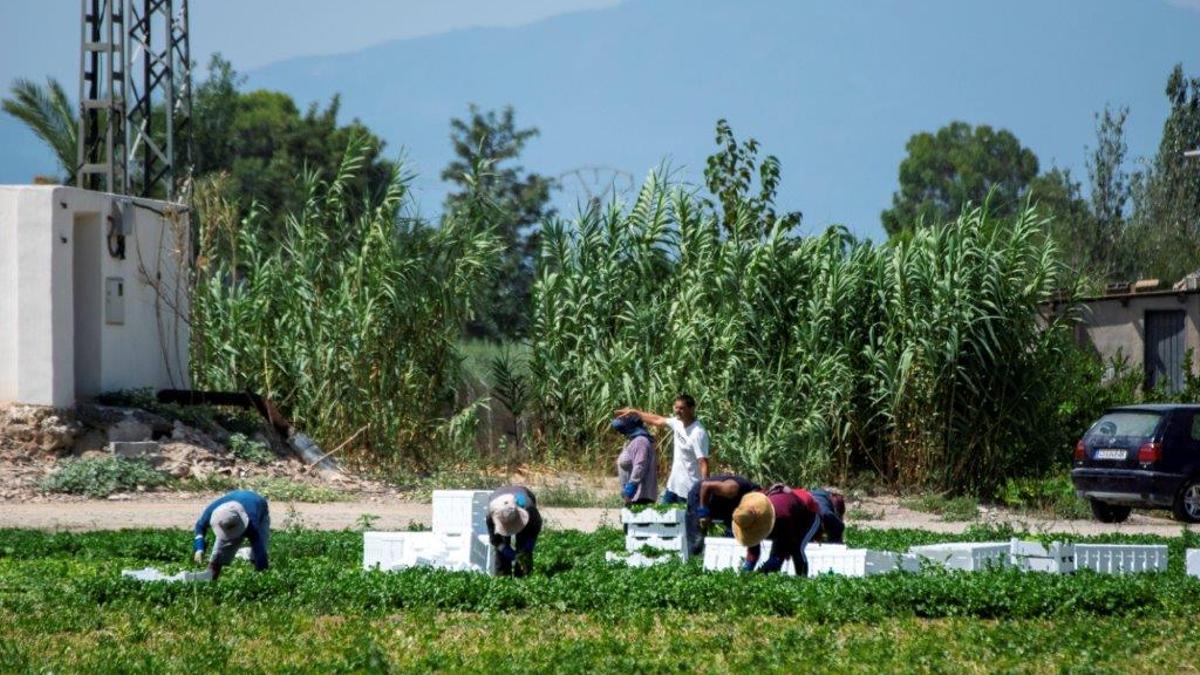 Jornaleros trabajando en El Raal, pedanía de Murcia