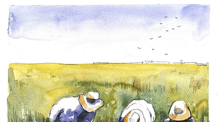 'La isla del arroz'. | ÁNGELES DE LA TORRE