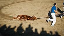 Becerro de corta edad torturado y matado en un festejo popular. Foto: The Animal Day / Jonás Amadeo Lucas