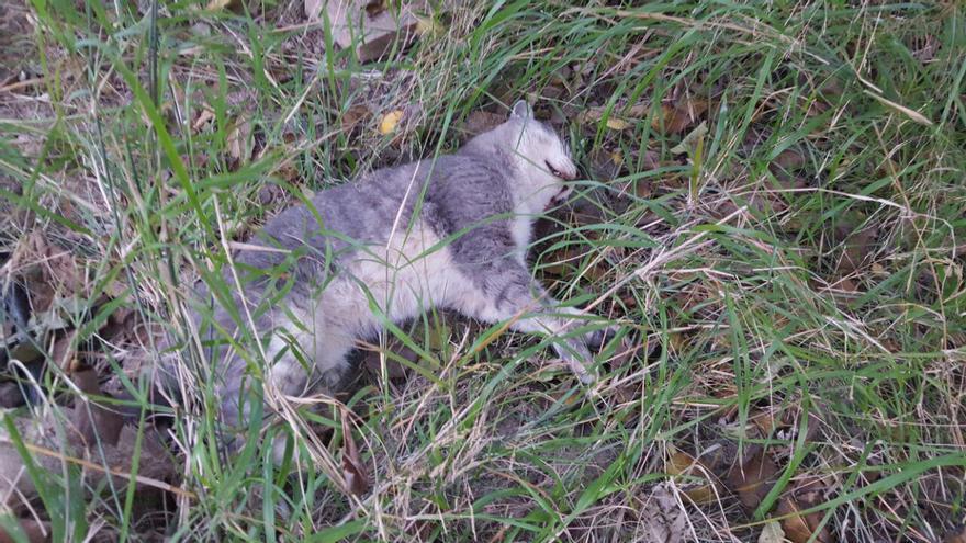 Varios animales hallados muertos con síntomas de envenenamiento en los alrededores de Murcia