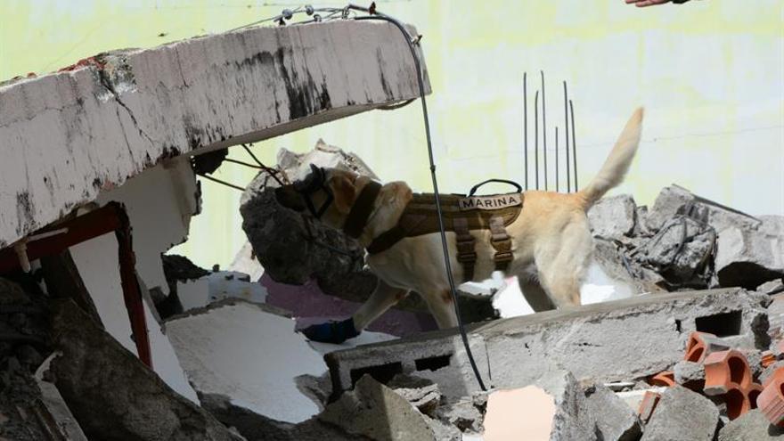 Frida, la perra salvavidas que se populariza en pegatinas, libros y muñecos