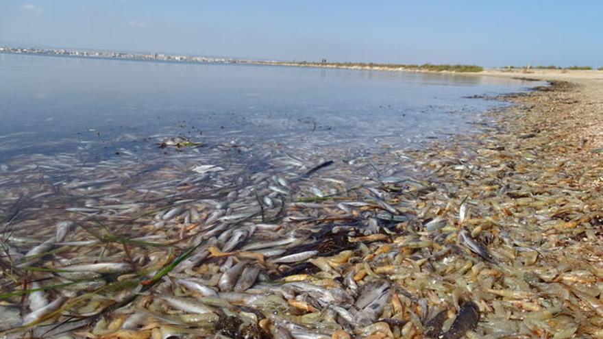 Peces muertos en el Mar Menor para artículo Nivel del Mar de María Iglesias