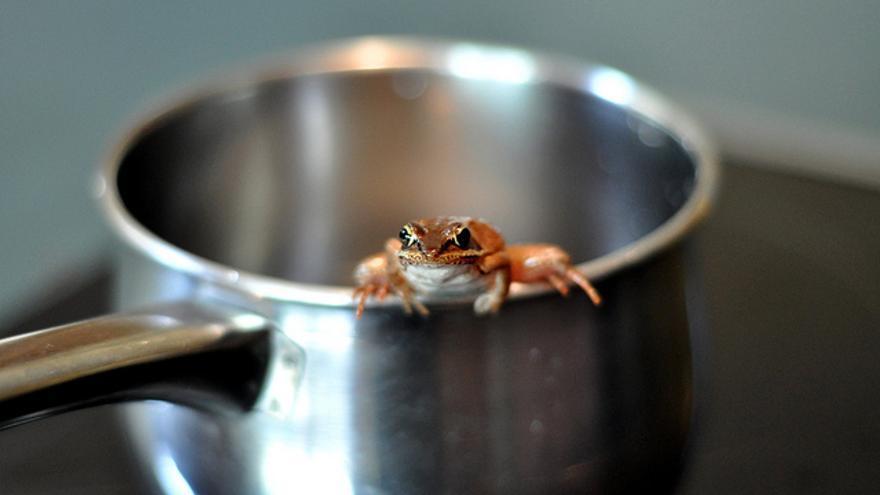 Una rana sentada en el asa de una cacerola. © 2010 J. Ronald Lee. CC BY 2.0
