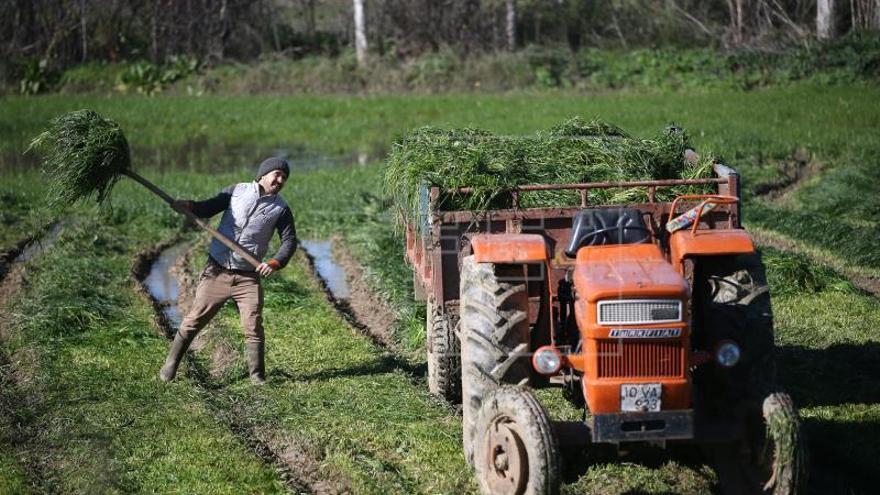 La FAO reclama más controles para evitar los accidentes en la agricultura