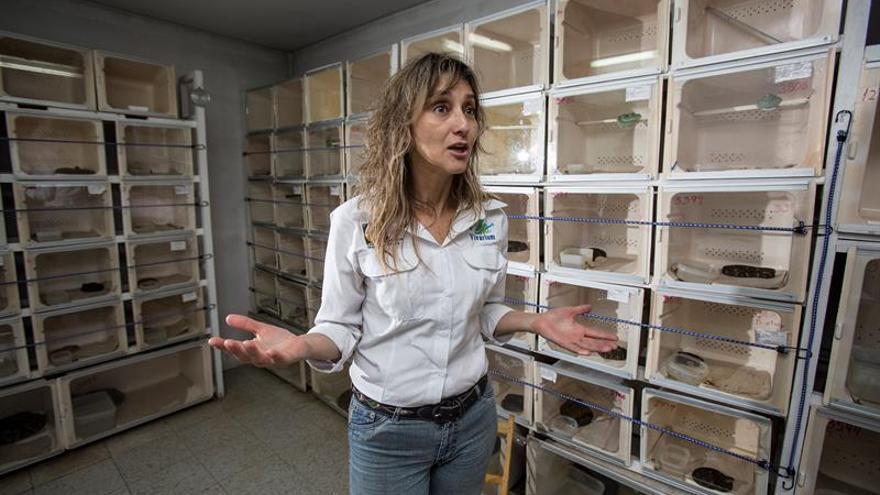 Ecuador: La odisea de 15 expertos contra las mordeduras de serpiente