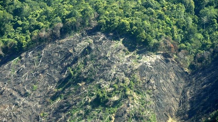 La fragmentación del hábitat provoca la extinción de los mamíferos