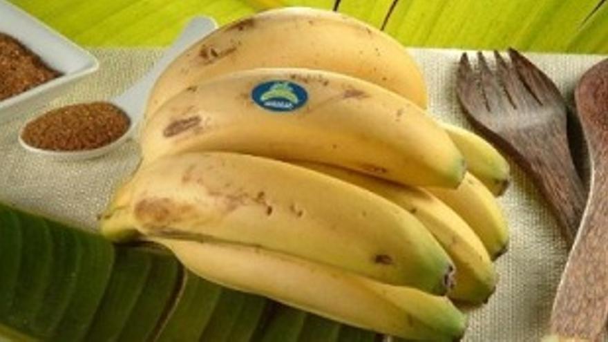 En la foto, varios racimos de plátanos de Canarias.