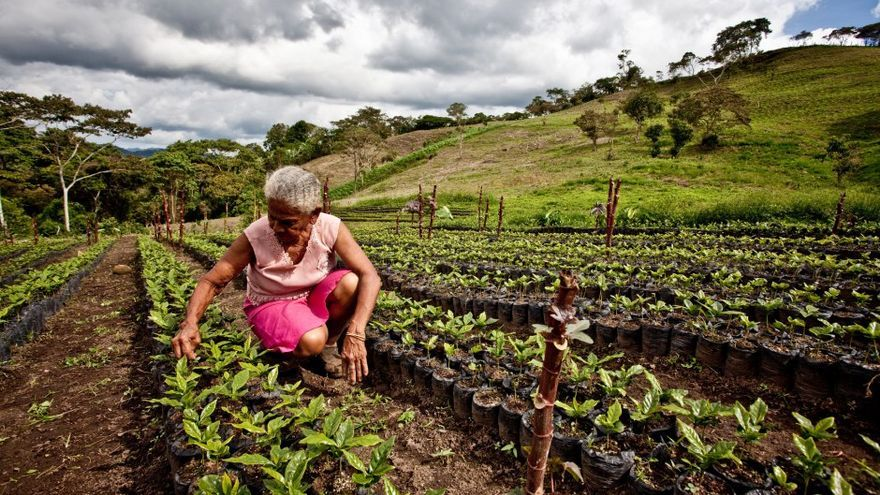 Mujer caficultora | PABLO TOSCO