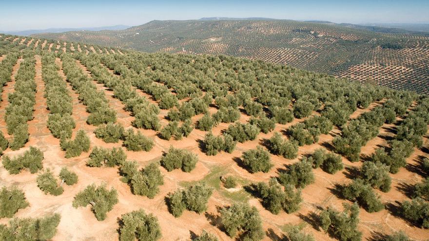 Desde 1925 se buscan medidas para diversificar la economía jiennense frente a su gran dependencia del olivar
