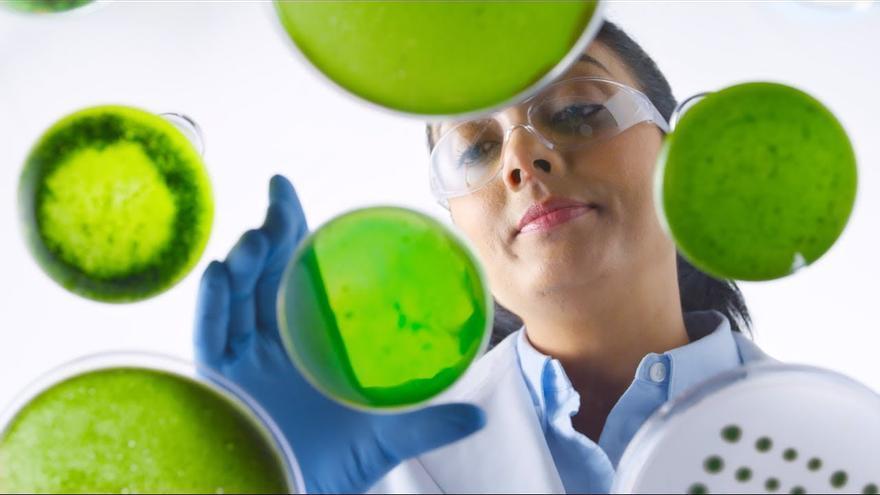 Imagen de la campaña de BP 'Un organismo diminuto'.